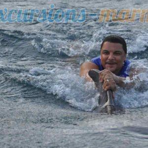 marmaris yunuslarla yüzmek