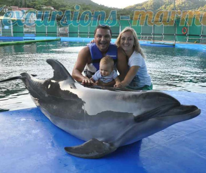 meeting with dolphins