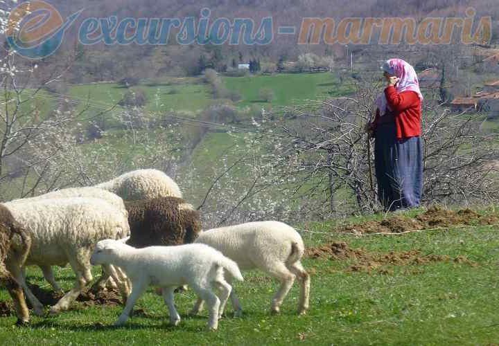 селски живот